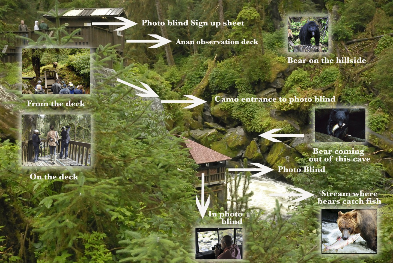 https://alaskaupclose.com/wp-content/uploads/2015/12/Anan-bear-observatory-info.jpg